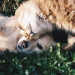 Thumbnail for 9 Ways to Extend Your Pet's Life
