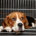 Thumbnail for Canine Influenza Confirmed in Canada
